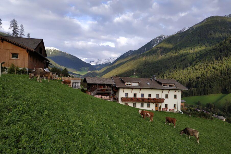 Herbst, der erste Schnee auf den Bergen, die Kühe kommen von der Alm...herrlich/Autunno, prima neve in montagna, mucche di malga tornono a casa..meraviglioso